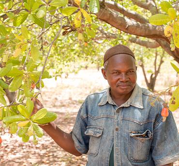 Cashew Farmer with cashew tree